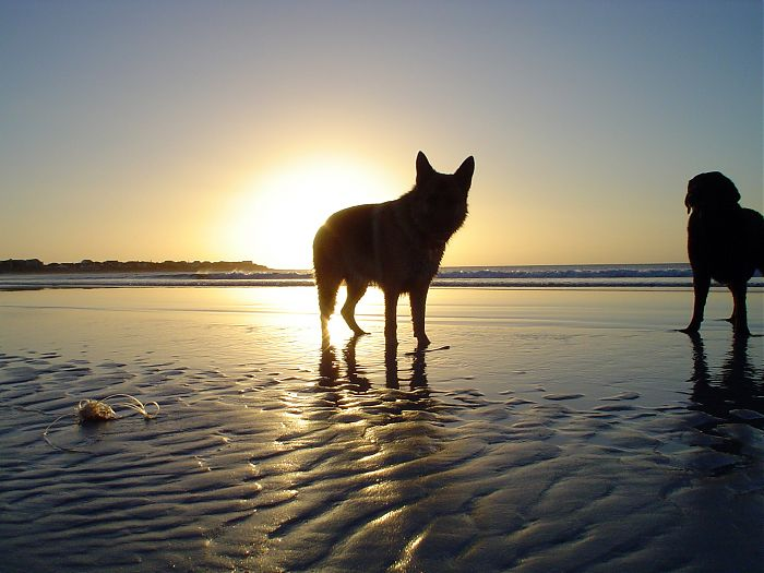 photoblog image Sunset Dog